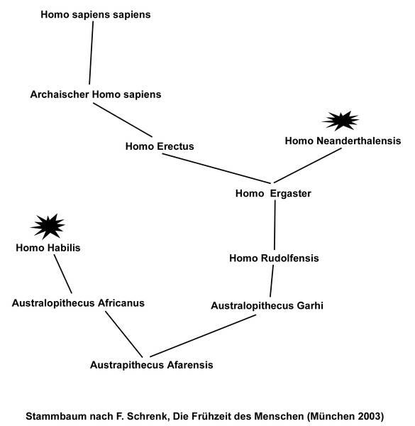 Grundlagen: Die Evolution des Menschen - praehistorische-archaeologie.de