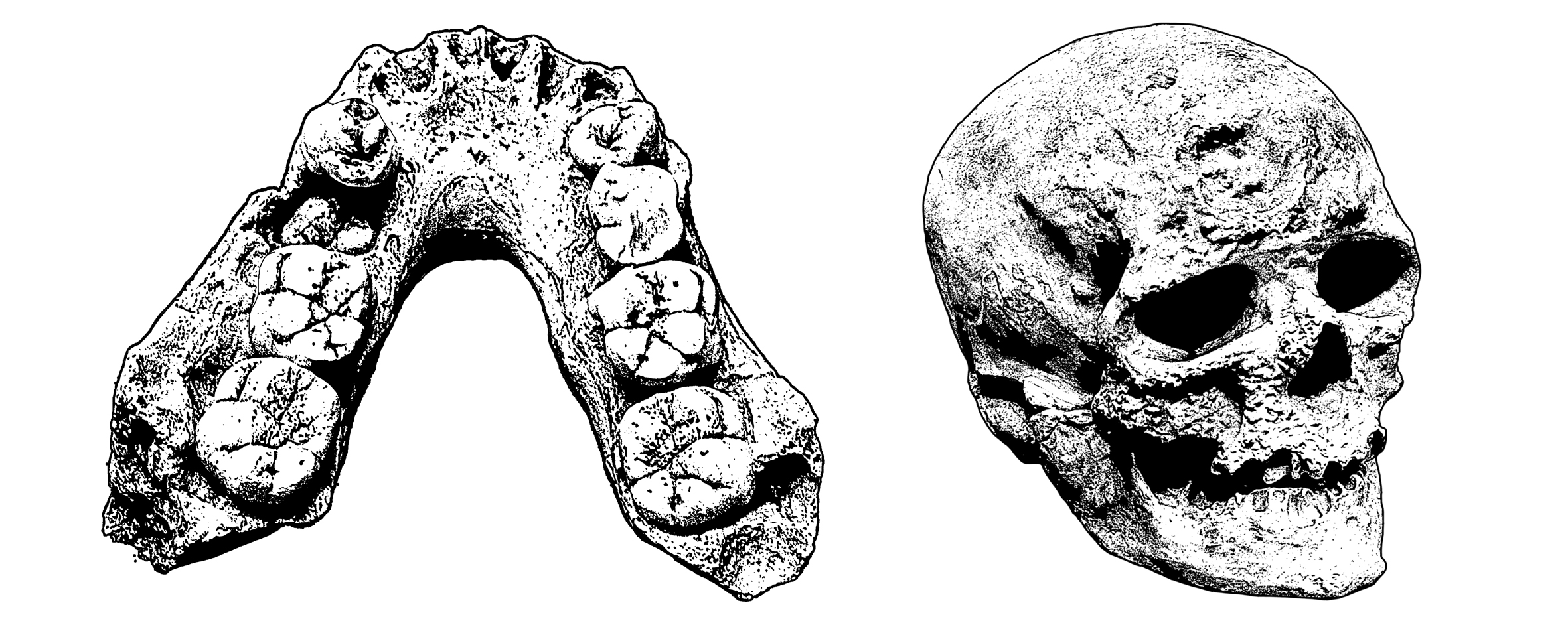 Fossile Datierung Evolution