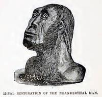 Neandertaler Rekonstruktion