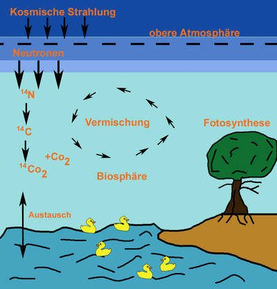 Radiokarbon Methode